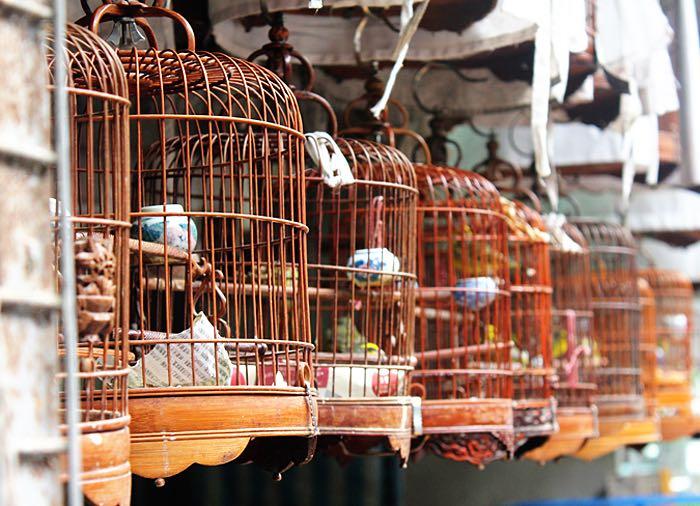 hong kong attractions for kids bird market