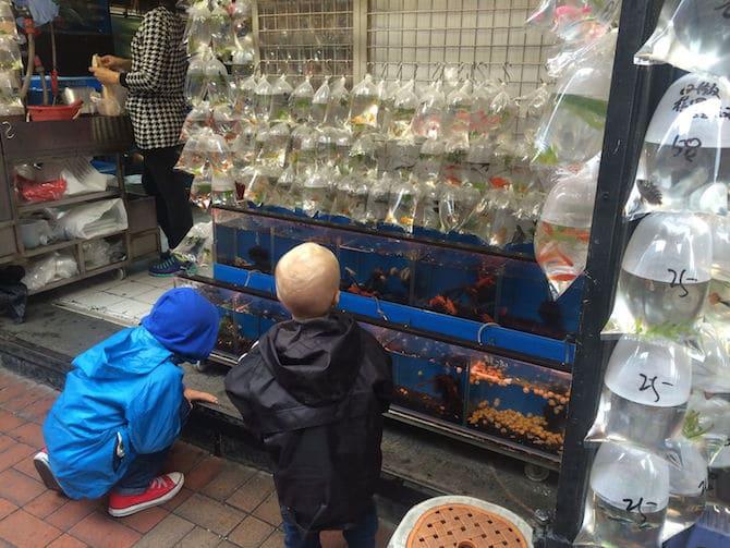 hong kong goldfish market boys