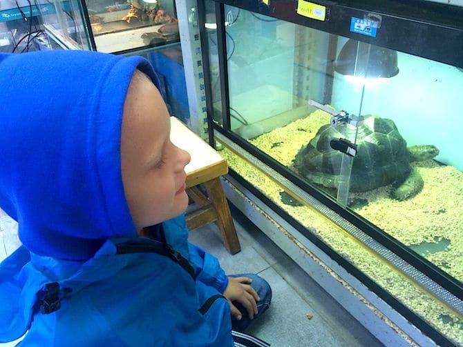 hong kong goldfish market giant turtle