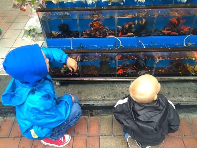 hong kong goldfish market looking