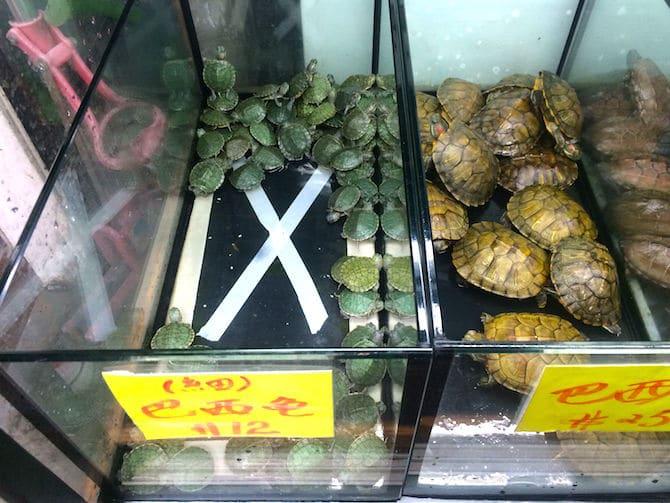hong kong goldfish market turtles