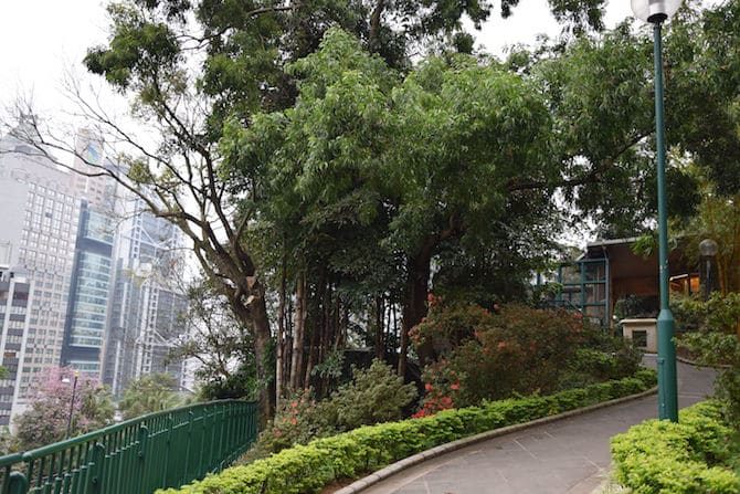 hong kong zoo and botanical gardens greenery