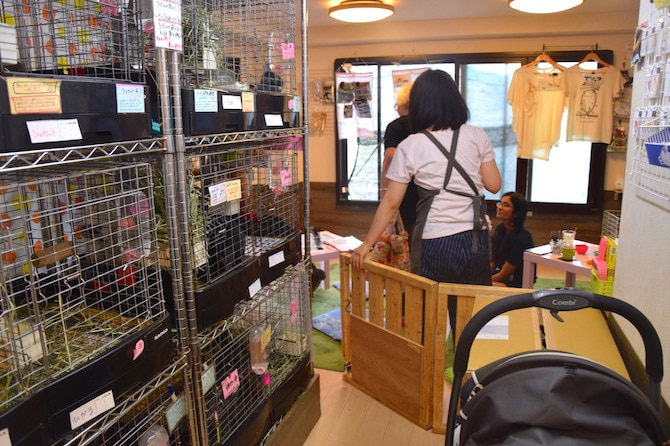 harajuku rabbit cafe hallway