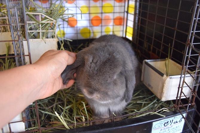 harajuku rabbit cafe pat