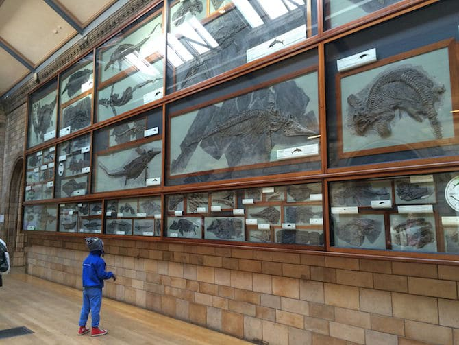 natural history museum kids london with kids fossil wall