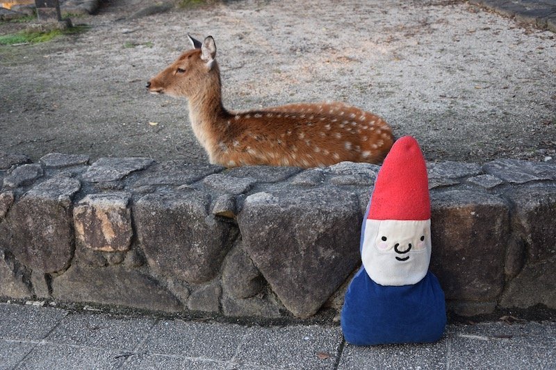 miyajima island and roam the gnome pic