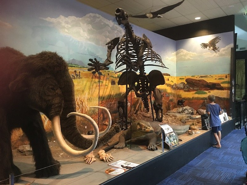 Dinosaur Museum Canberra mammoth pic