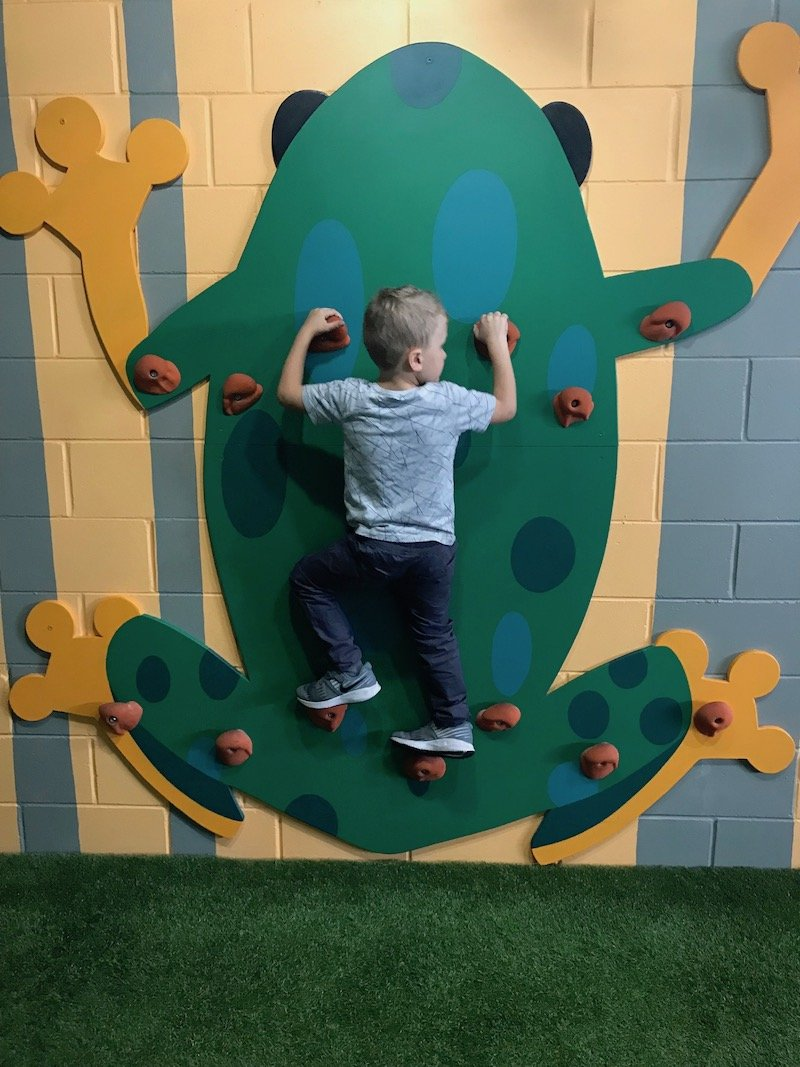 Photo - Tree Top Indoor Play Centre Gold Coast frog wall