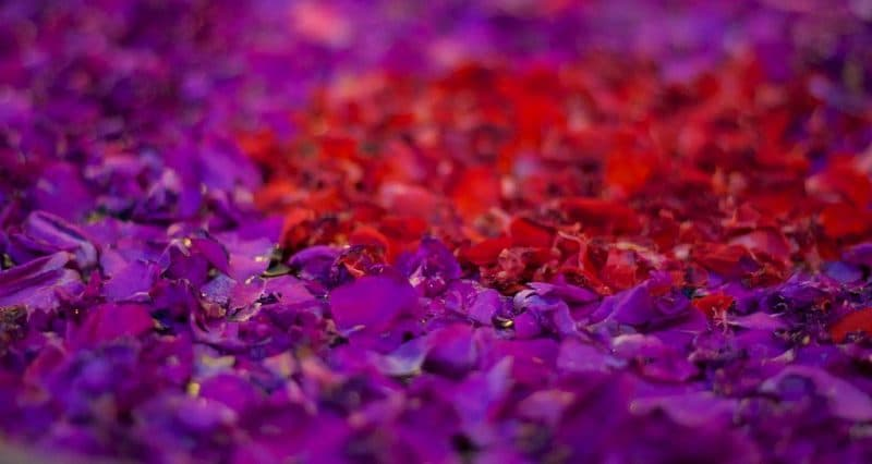 flower spa bali