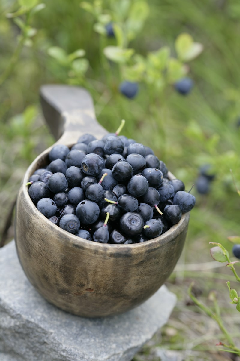 things to do in rovaniemi in summer - blueberries VR