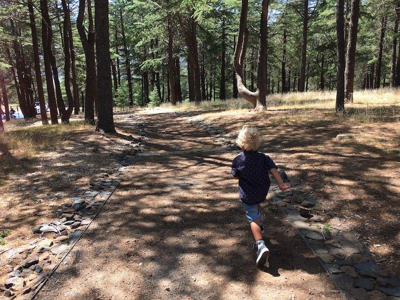 arboretum canberra nature forest pic