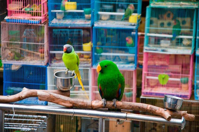 hong kong bird garden by mitch altman flickr