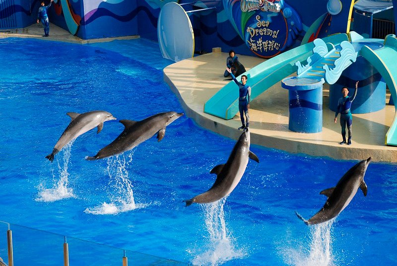 dolphins at whiskers theatre by xiquinhosilva