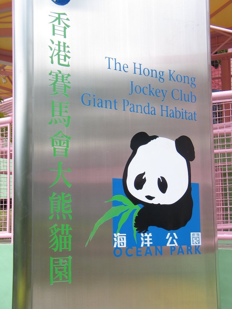 the hong kong giant panda habitat
